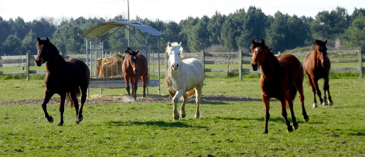 location-de-vacances-avec-les-chevaux-en-touraine